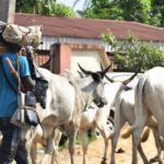 Annoying Reason Herdsmen Gave Before Attacking Delta Women On Their Farms