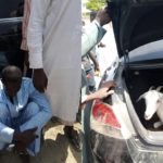 'Big Boy' Caught Stealing Goat In A Car Given To Him By Politician (Photos)