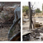 Herdsmen Kill 15 People Including Aged Couple During Raid On Three Comunities In Adamawa State