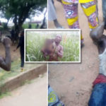 'I Use Chemical To Dry Up My Victims' Car Wash Attendant Nabbed With Complete Human Skeleton Confesses In Ibadan (photos)