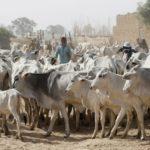 Two Killed, Three Injured As 'Herdsmen' Raid Ekiti Community
