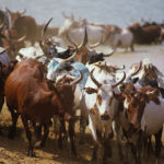 Herdsmen occupy Odu'a tomato factory, plotting attack –Ogun monarch
