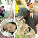 Dog sniffs out day-old baby buried alive by its 15-year-old mother