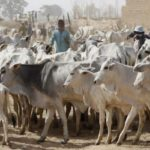 South-East Govs & Others Reject FG's Ruga Settlements For Herdsmen Across The Country