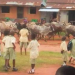 Herdsmen Attacks: 2,000 Children Out Of School In Nasarawa