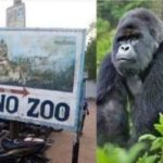 Kano zoo speaks on 'Gorilla stealing, swallowing' N7m