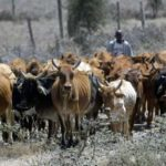 Ohanaeze rejects Ruga settlements in Igboland