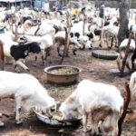 Eid-el-Kabir : Reps Member Doles Out N6.5m To Constituents To Buy Sacrificial Rams