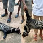 Residents Of Akwa Ibom Kill Animal Terrorizing Their Chicken (Photos)