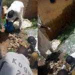 PHOTOS: Several Pages Of Holy Qur'an Retrieved From School Sewage, Zamfara Govt. Suspends Staff Indefinitely