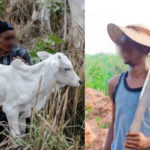 Farmer In Trouble For Killing Fulani Herder Who Destroyed His Crops