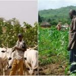 Two killed in farmer-herder clash in Edo