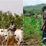 Two killed in farmer-herder clash in Edo