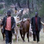 Ogun State: Monarch Threatens To Release Warriors On Fulani Herdsmen