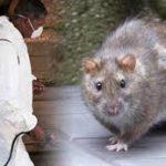 Osun Government Confirms 2 Cases Of Lassa Fever