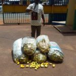 Man poisons 143 bags of garden eggs in Enugu