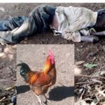 Mob Stones Father Of 7 To Death For Stealing Chicken To Feed His Hungry Family