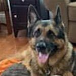 First Dog To Test Positive For COVID-19 In The U.S. Has Died