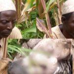 Man arrested in Bauchi for burying his newborn grandchild alive (Graphic photos)