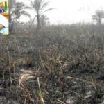 Again, herdsmen set Falae's farm ablaze