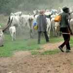 Suspected Herdsmen Destroy N6.6m Maize Farm In Ekiti Forest Reserves