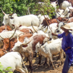 Police Speak On Alleged Influx Of Herdsmen To Ekiti Forests