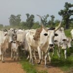 Osun OPC: Criminal Herders Have Yoruba Collaborators