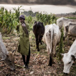 Northern Coalition Issues Directive To Fulani Herdsmen In South
