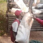 PHOTOS: NDLEA Uncovers Cannabis Village, Seizes Drugs 'Worth N1.4bn' In Edo