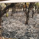 Police investigate man's death near Igangan farm