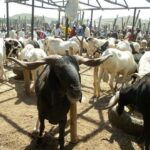 Price Of Rams Skyrocket In Lagos As Cattle Traders' Strike Persists