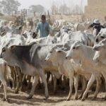 Graphic photos: Fulani Herdsmen Return To Igangan, Cut Retired Principal's Hands