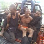 Busted: Amotekun, Oodua Peoples Congress, Vigilantes Arrest 6 Fulani Bandits In Oyo Forest With 183 Cows, Weapons, Cash (photos)