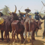 7 Fulani Herdsmen, 850 Cattle Killed In Kaduna State