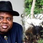 Open Grazing: Bayelsa Govt Impounds 34 Cows