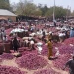 Farmers lament as Onions rotten in North over blockage of supply to South