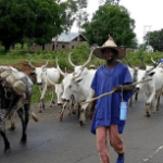 Herdsmen flee as cow kills 2 months old baby in Delta