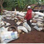 NDLEA Intercepts Warehouse, Arrest Two With 524 Bags Of Indian Hemp In Ondo