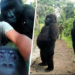 Ranger Who Took Selfie With Gorillas Explains How It Happened